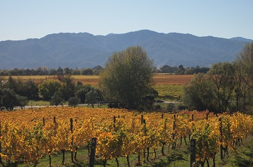 Half Day Wine and Gourmet Tours